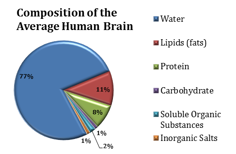 Composition of the Average Human Brain